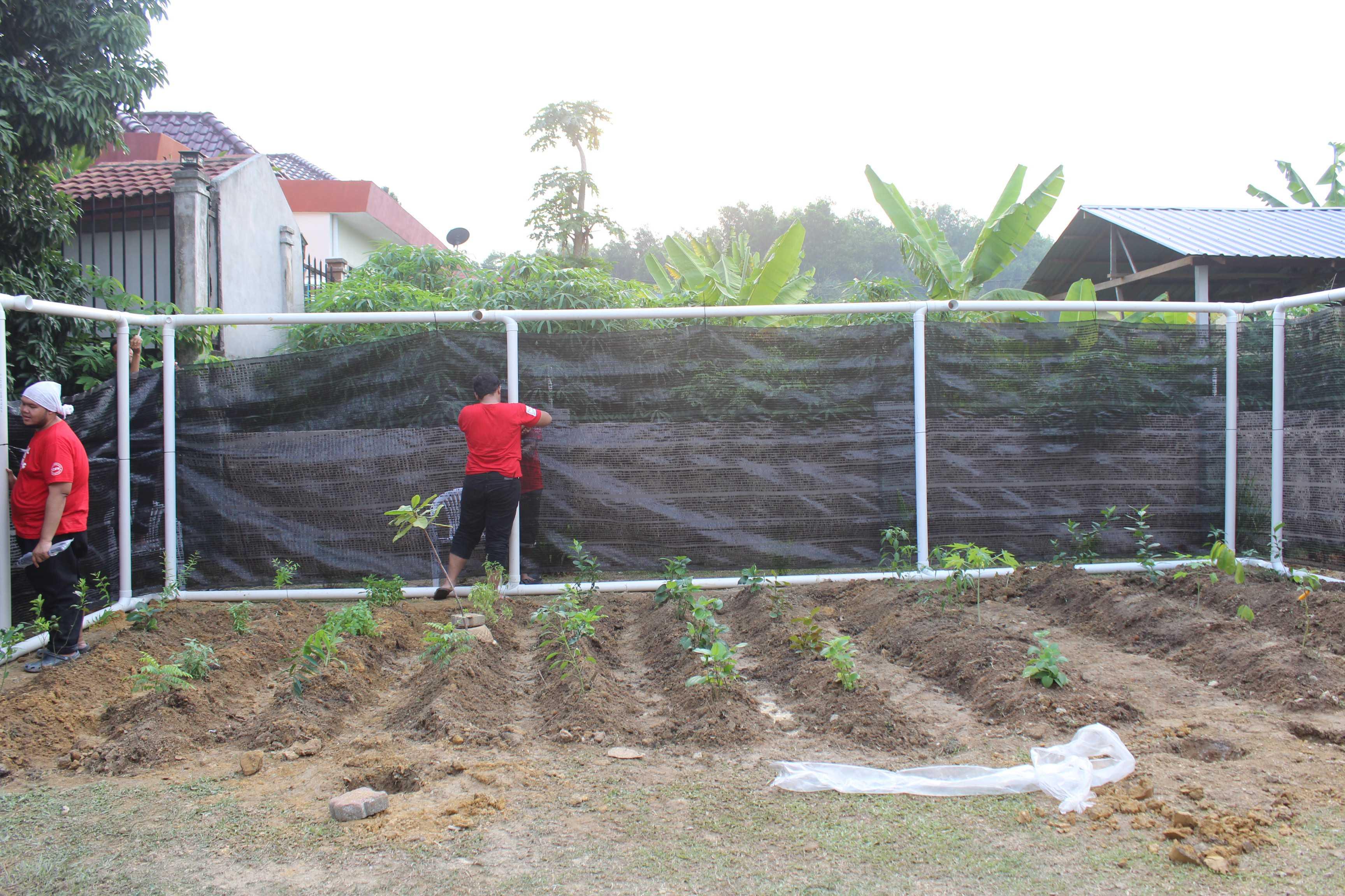 Keadaan kebun setelah hampir siap dibina.